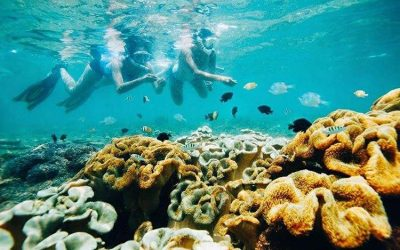 Tanjung Lesung Coral Conservation