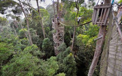 Bukit Bangkirai Hill – Situs Konservasi Alam