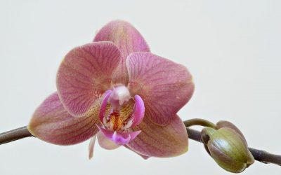 Orchid Botanical Garden