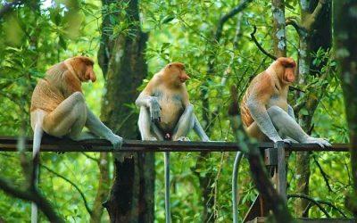 Tarakan Mangrove Forest