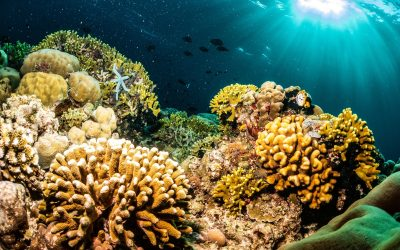 World's Coral Triangle – Bunaken Marine Park