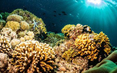 Taman Nasional Bunaken – Segitiga Karang Dunia