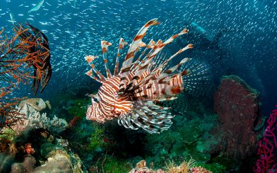 Wakatobi UNESCO Biosphere Marine Reserve